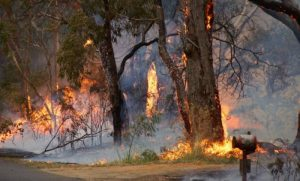 Trees close to the buildings drop leaves into guttering cause fire danger