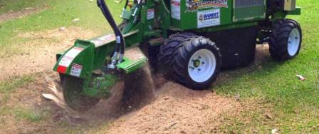 Stump grinding to remove stumps
