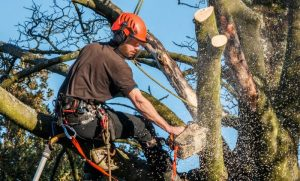 Increase the health and longevity of your trees, pruning is a good investment