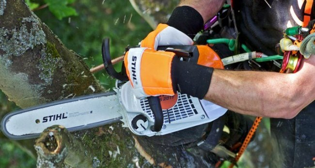 Arbator offer affordable range of tree pruning services