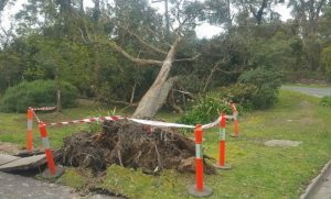 Look out for storm damage on your trees