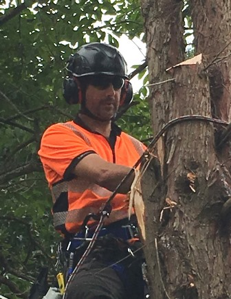 Arbator tree climbing