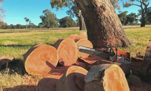 Red Gum Firewood Collecting